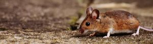 pests, vermine and renters insurance