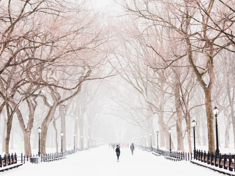 winter storm central park - nyc