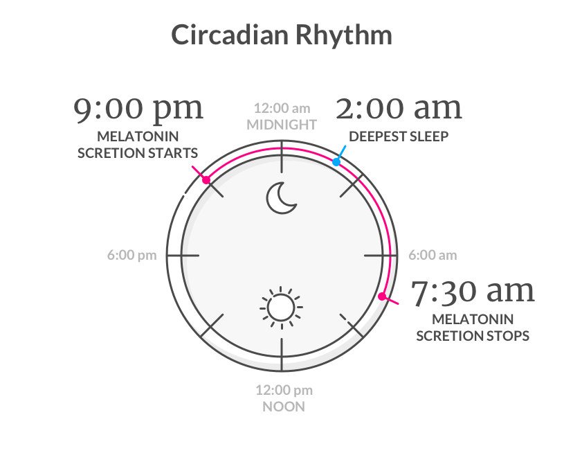 Circadian Rhythm - Lemonade Blog