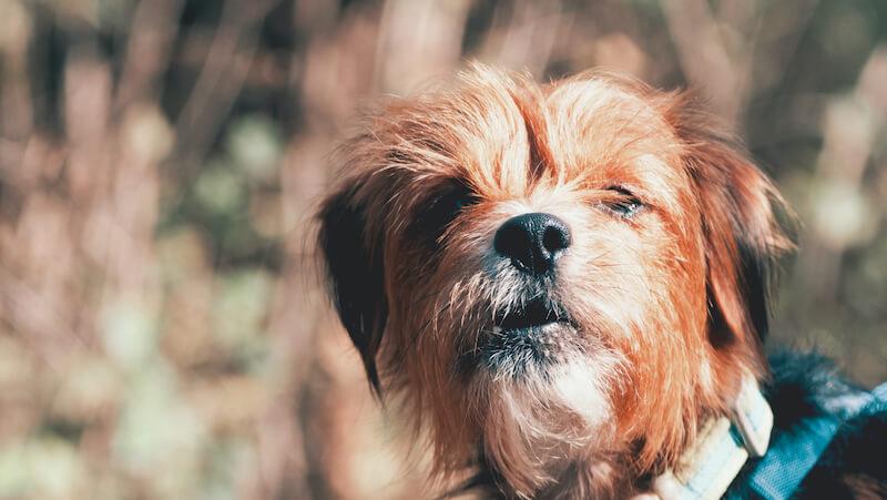 dog feces health