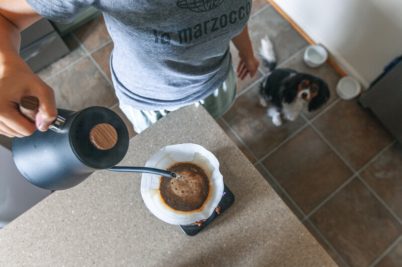 dog eat caffeine
