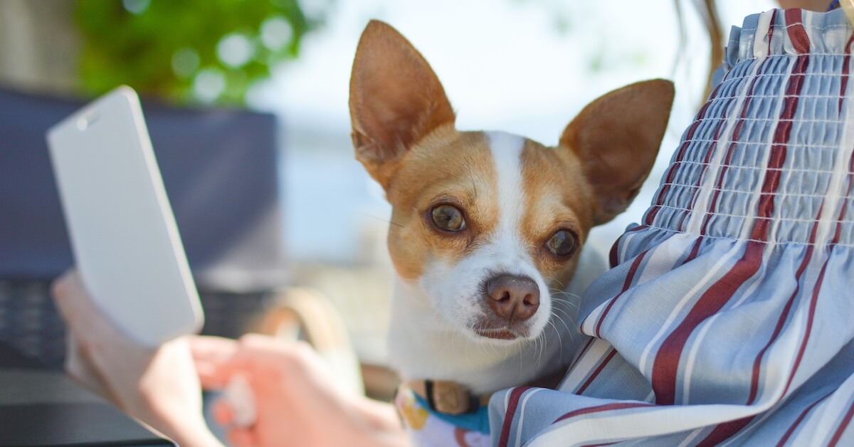 How Much Does a Vet Visit Cost? - Lemonade Blog