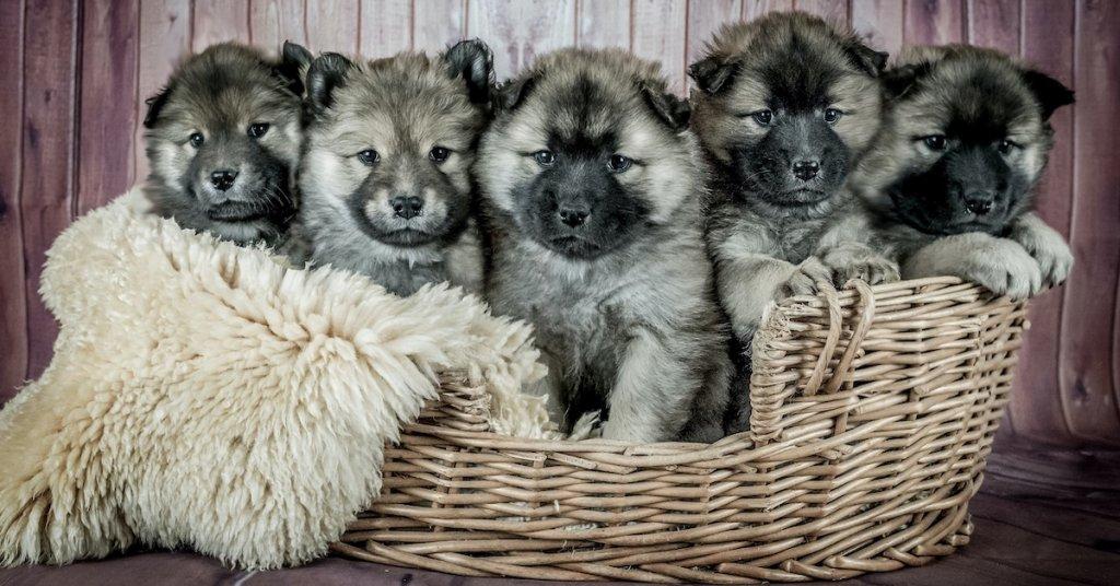 puppy kitten insurance