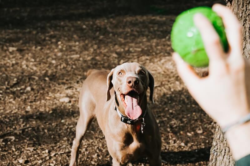 Top Ohio dog parks