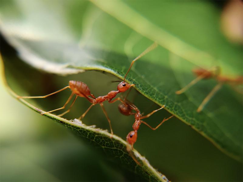 Tipps Ameisen im Haus vertreiben